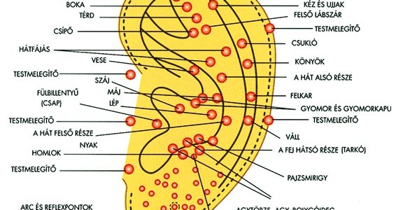 Fülmasszázs, avagy a fül reflexpontjainak masszírozása